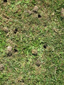 aeration and thatch removal